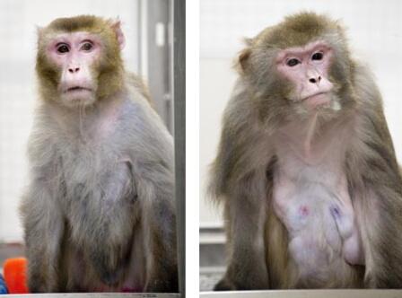 「カロリー制限 長寿 サル」の画像検索結果