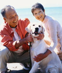 高齢者人口は3300万人に増加 4割以上が「孤独死は身近」 高齢社会白書