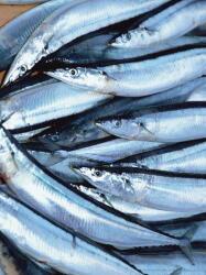 魚油サプリメントで2型糖尿病に対策 血中のアディポネクチンを増加