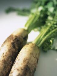 コミュニティ菜園で野菜作り 収穫は「肥満の解消」