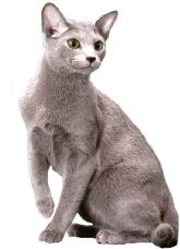 ネコに手を咬まれたらすぐに治療を 深刻な症状に進展するケースも