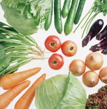 野菜のポリフェノールがコレステロール吸収を抑え肥満を防ぐ