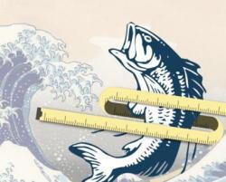魚を食べると体脂肪が燃焼するメカニズムを解明 EPAとDHAの効果