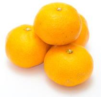 温州ミカンの「β-クリプトキサンチン」が生活習慣病の予防に有用
