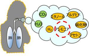 呼気成分を測定できる携帯型センサーを開発 生活習慣病を早期発見