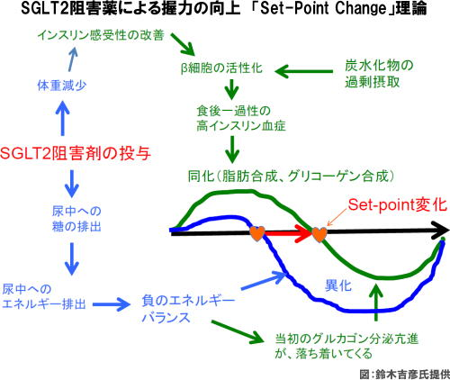 SGLT2阻害薬による握力の向上 「Set-Point Change」理論
