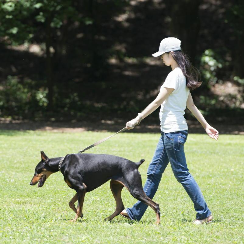 犬の散歩は運動になるか? 運動不足を解消するのに効果的である可能性