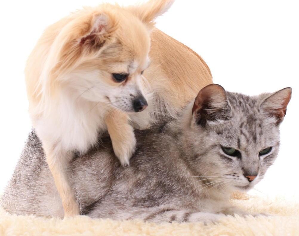 犬・猫からの感染症「コリネバクテリウム・ウルセランス」 死亡例も