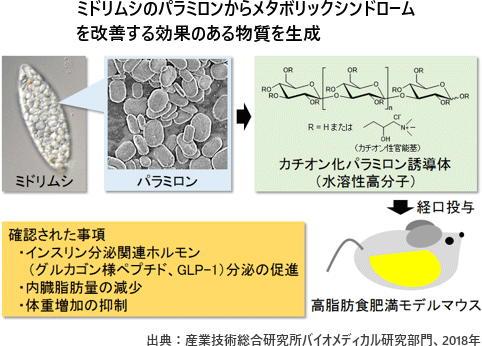 「ミドリムシ」からメタボを改善する成分 「痩せるホルモン」を促進