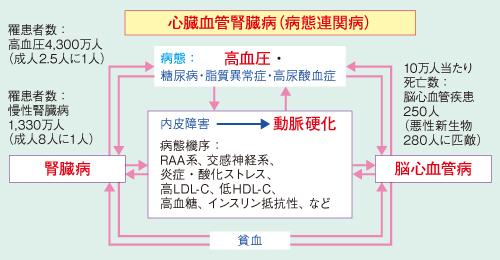 図1 心血管腎臓病に立ち向かうための臨床、教育、研究