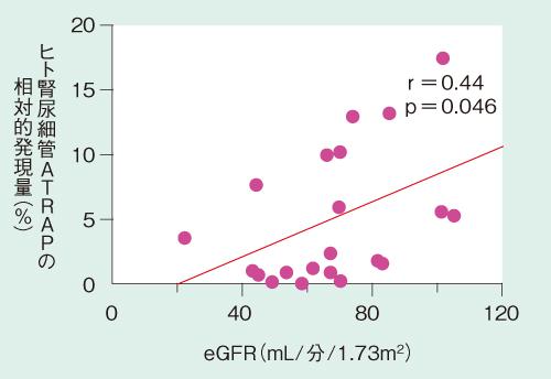 図2 ヒト腎尿細管のATRAP発現と腎機能の相関