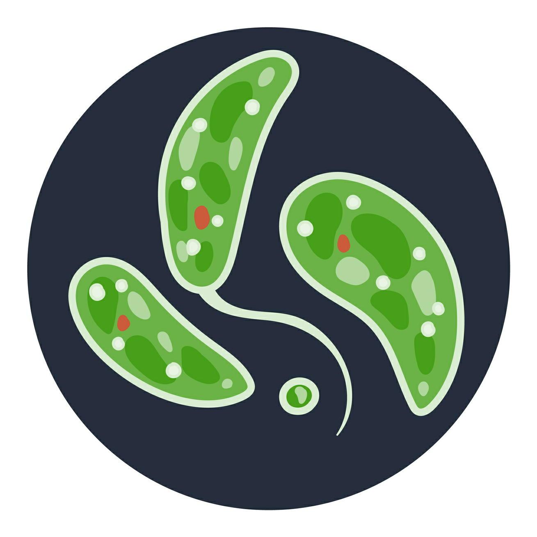 「ミドリムシ」の成分が血糖値の上昇を抑制 期待できる健康効果