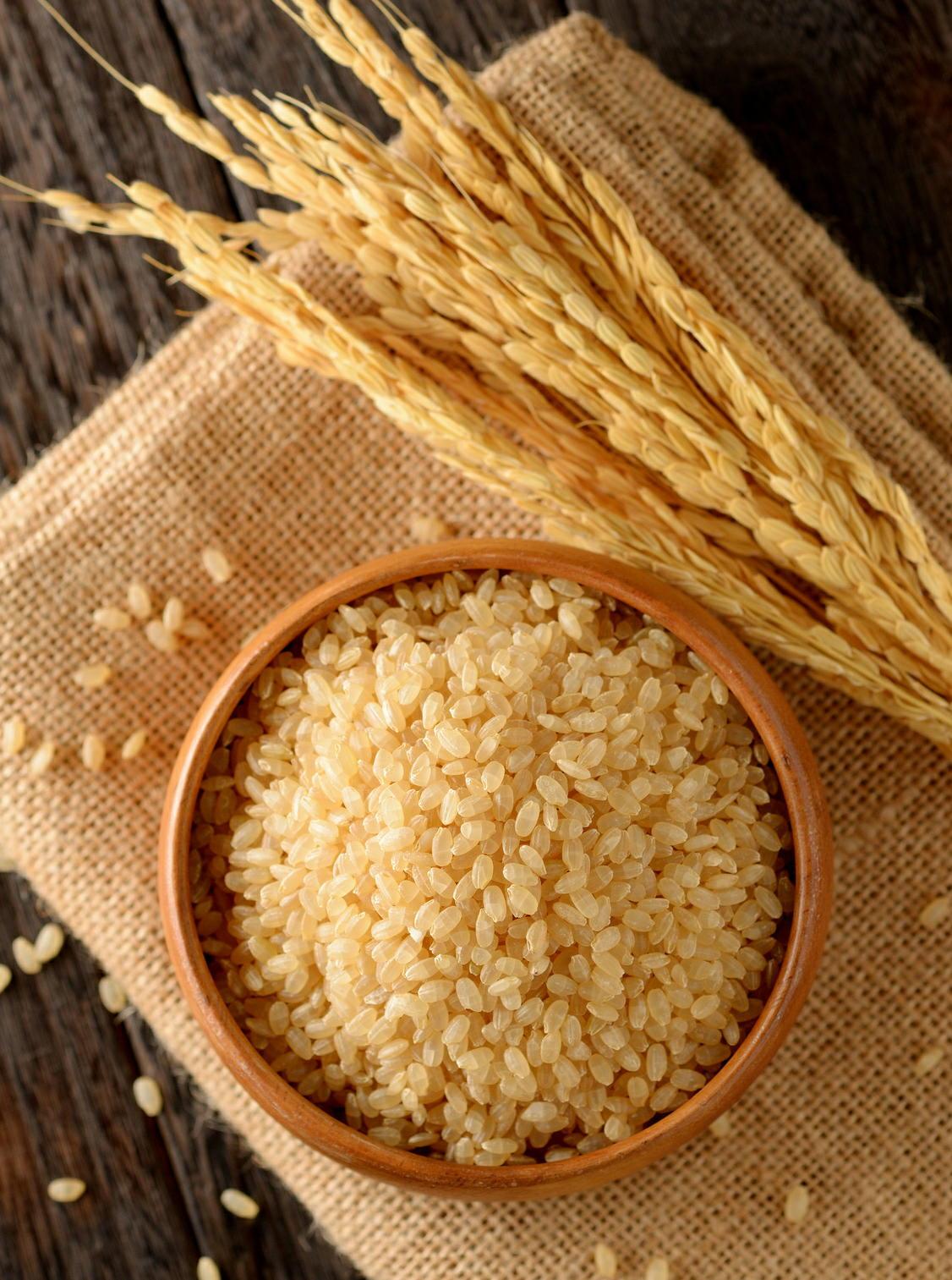 新しい「発芽玄米」で脳内「BDNF」が増える 脳卒中や認知症などを予防 国立循環器病研究センター