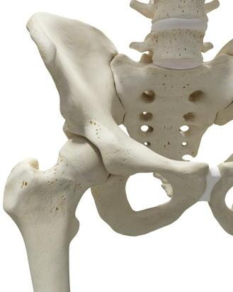 骨粗鬆症の検診受診率 全国ランキングを発表 1位は栃木県 骨粗鬆症財団