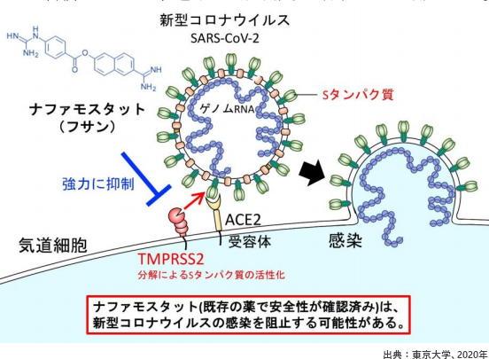 コロナ ウイルス の 治療 薬